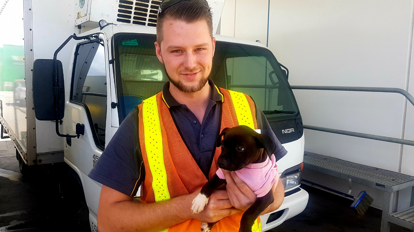 RAA rescues puppy