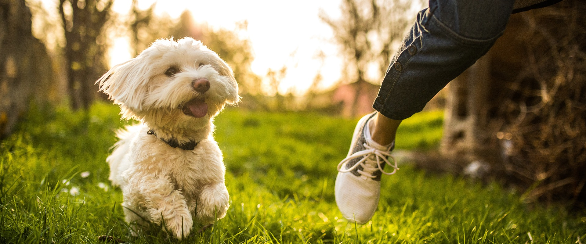 Take your pampered pooch on an invigorating walk through the city.
